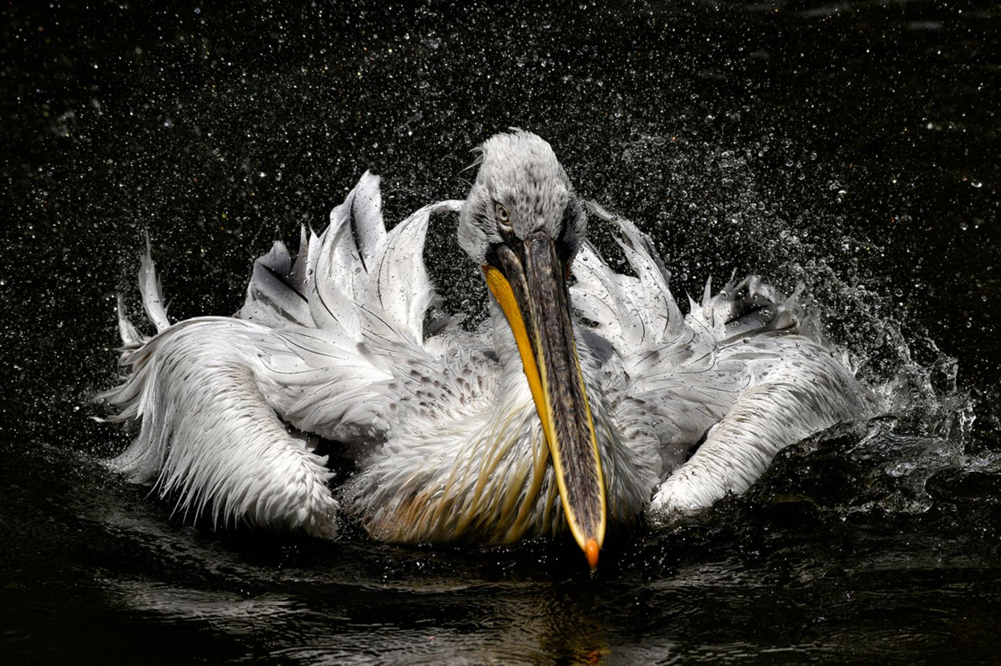 Jan Knot, Czech Republic, Commended, Open, Wildlife, 2017 Sony World Photography Awards