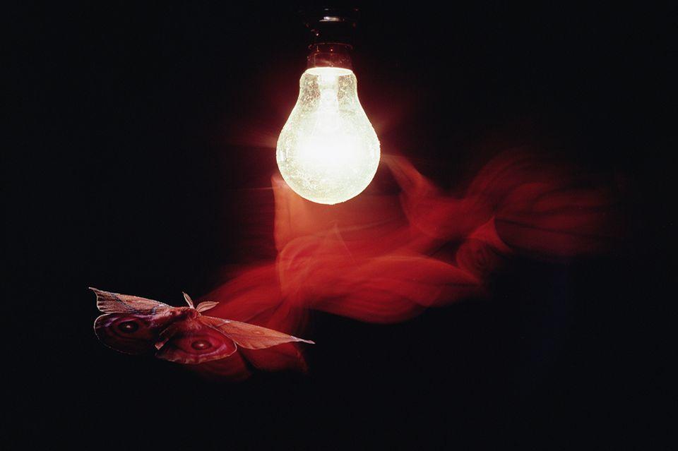 Motte zum Licht