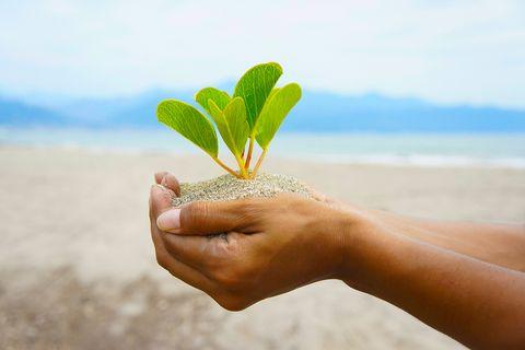 Hände halten eine Pflanze in der Hand