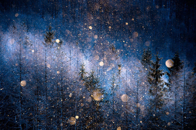 Masayasu Sakuma, Japan, Shortlist, Open, Nature, 2017 Sony World Photography Awards