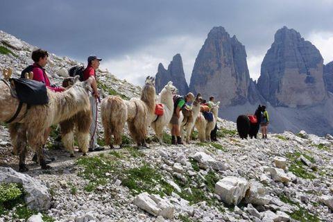 Lamatrekking, Südtiroler Alpen