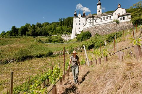 Neuer Wein von Marienberg