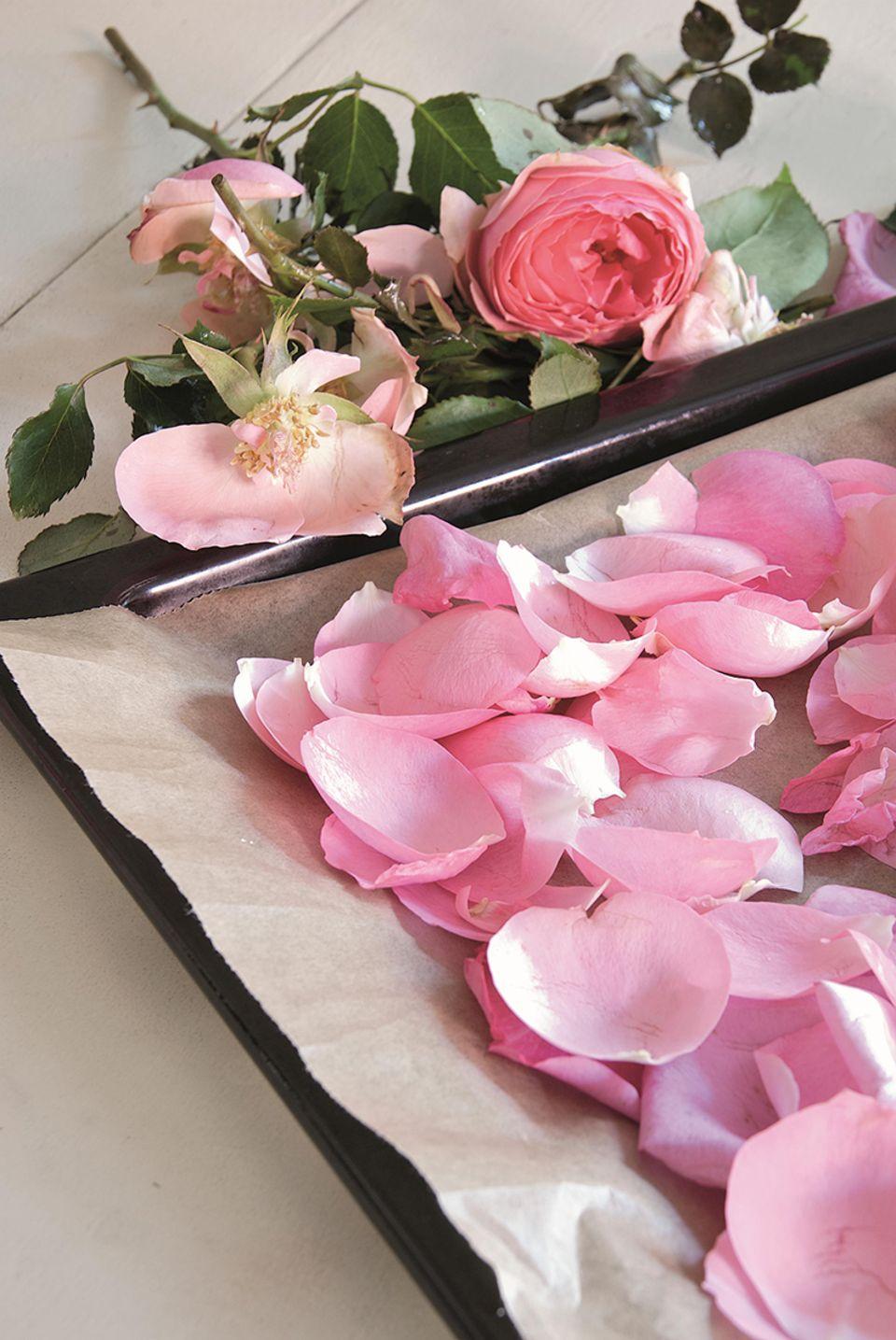 Rosenblüten auf einem Backblech