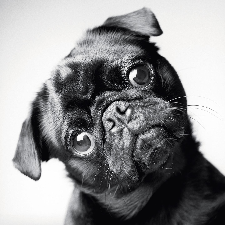 Dog Years: Faithful Friends, Then & Now by Amanda Jones (