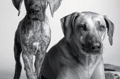 Dog Years: Faithful Friends, Then & Now by Amanda Jones
