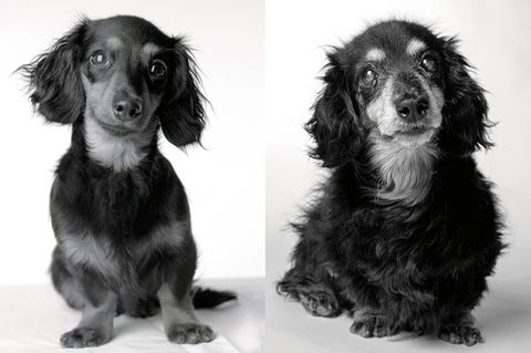 Dog Years: Faithful Friends, Then & Now by Amanda Jones