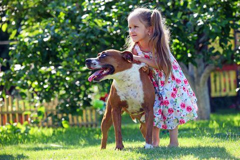 Junges Mädchen und Stafford Terrier