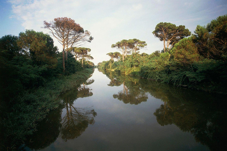 Pinienwald bei Ravenna