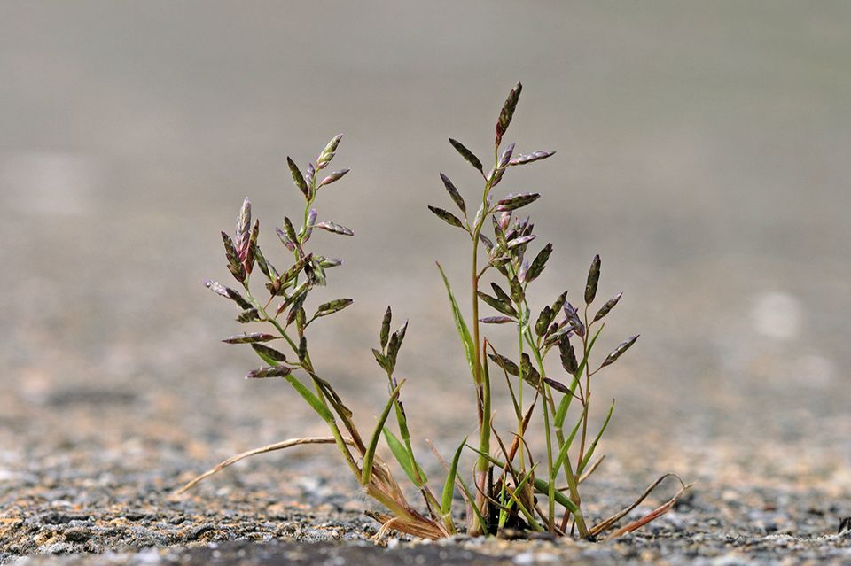 Seltene Pflanze aus dem 19. Jahrhundert