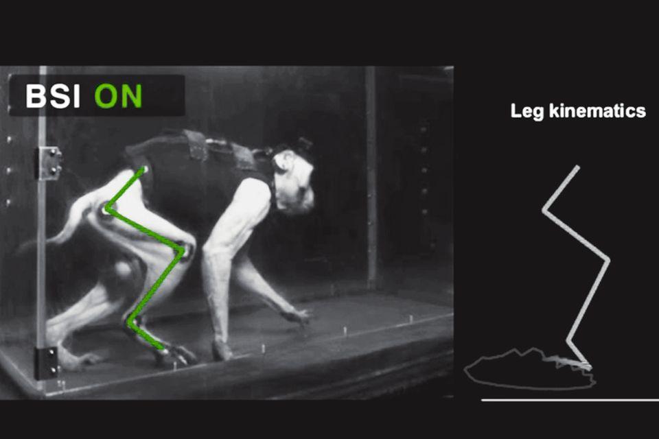 Hoffnung für Gelähmte?: Ohne elektronische Überbrückung zieht der Affe das Bein nach (unten), mit Stimulation kann er auftreten