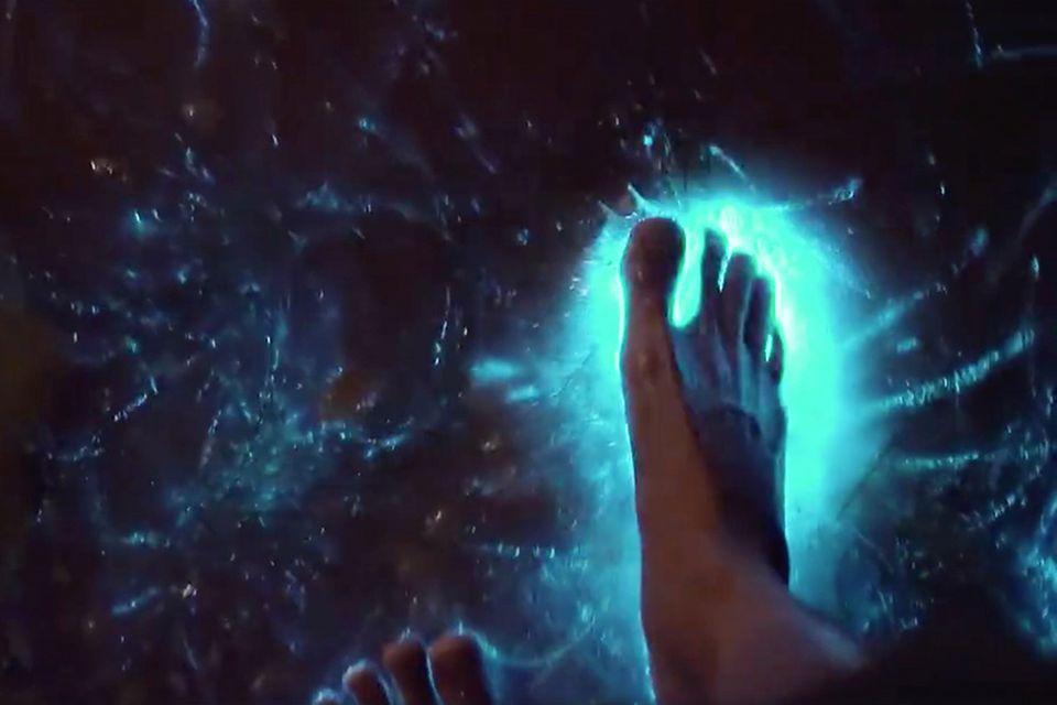 bioluminiszenten Mikroorganismen bringen das Wasser zum leuchten