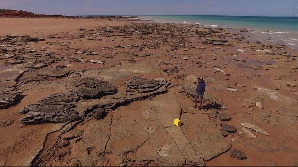 Jurassic Park in Australien entdeckt