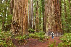 Redwoods State Park, Kalifornien