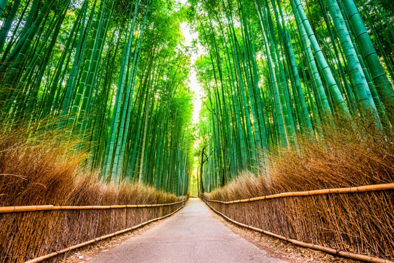Baumbuswald Sagano in Japan