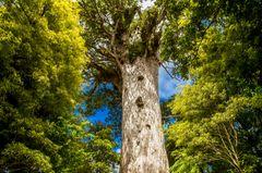 Waipouna Forest, Neuseeland
