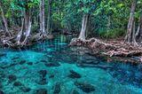 Mangrovenwald von Tha Pom, Thailand