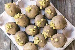 Kartoffeln im Eierkarton