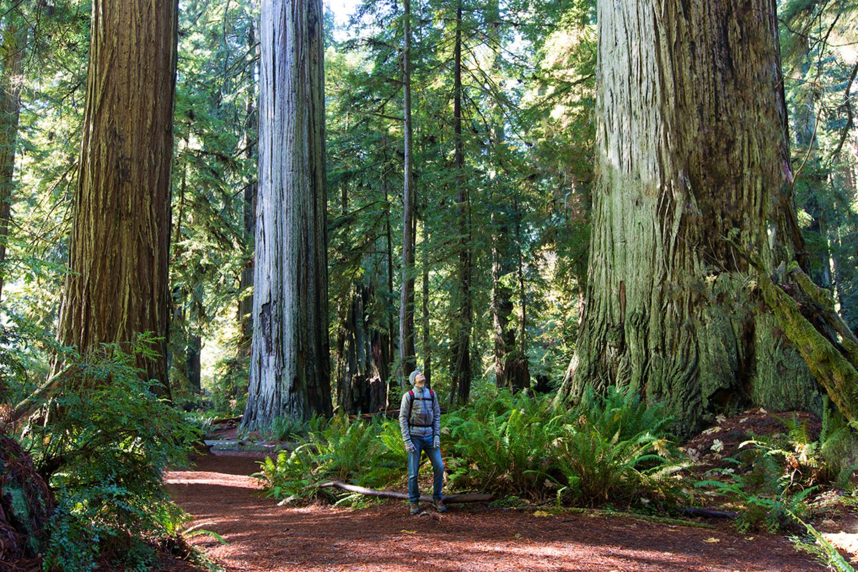 Redwood Forest, Kalifornien