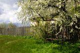 Baum auf dem Nachbargrundstück