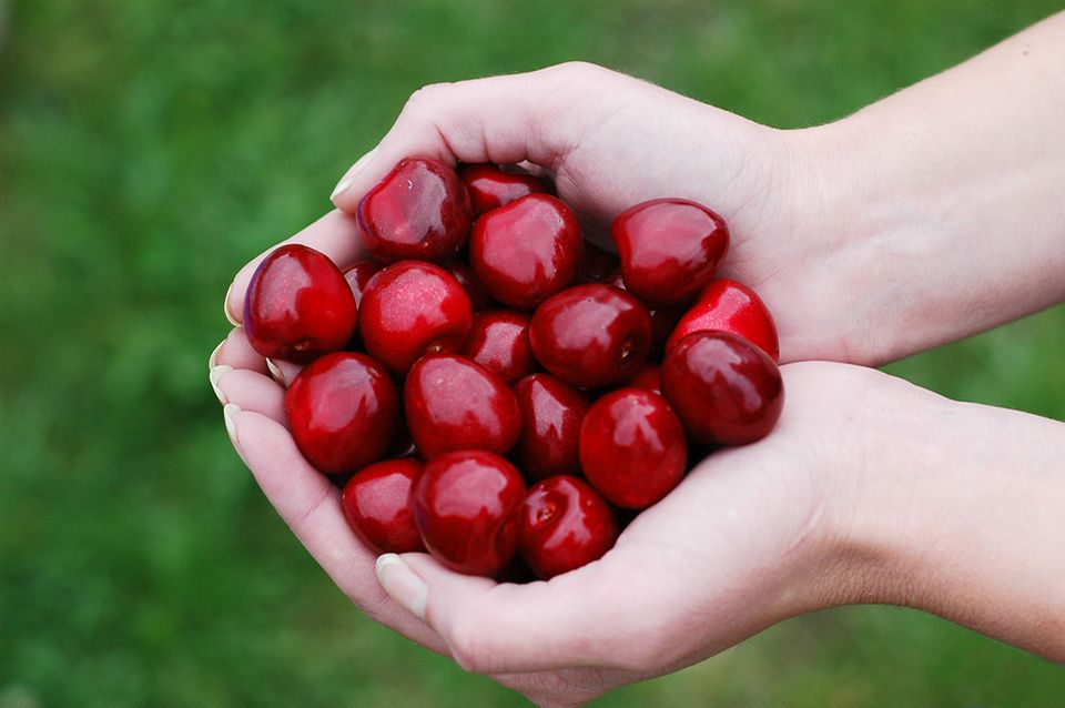Kirschen in Händen