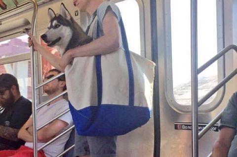 #subwaydog