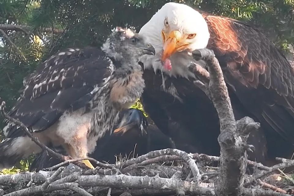 Tiere: Tiervideos: Das Beste aus dem Netz