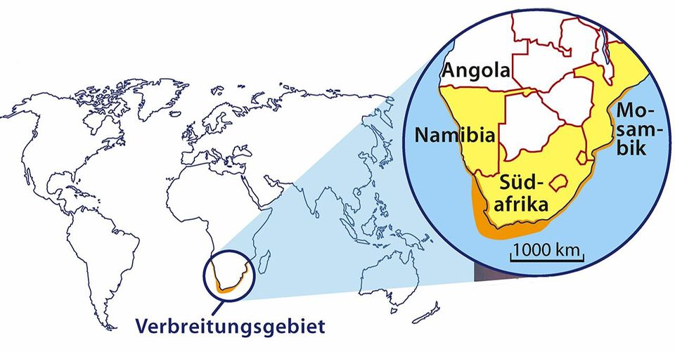 Brillenpinguine Verbreitungs-Karte