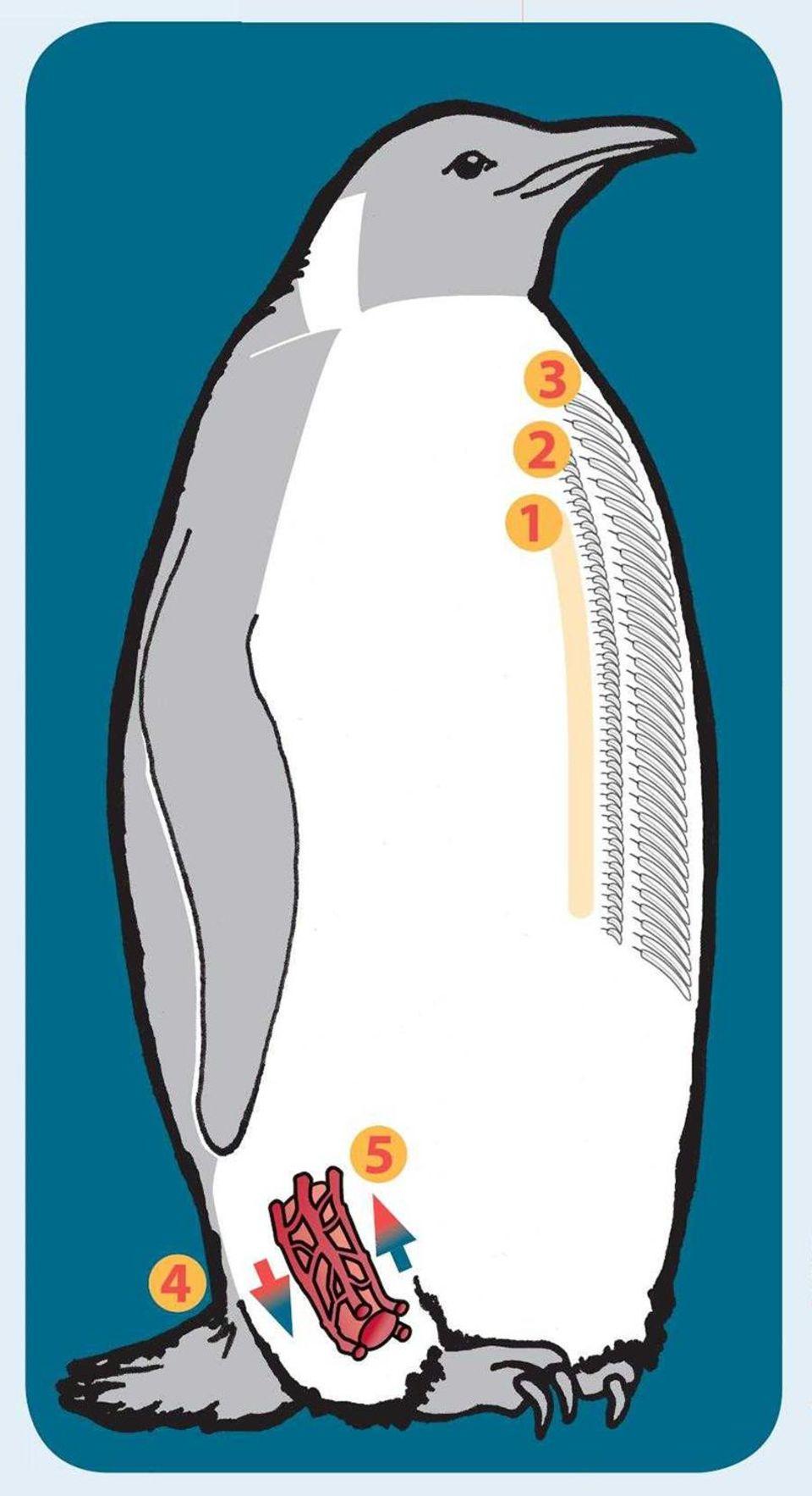 Lebenstricks der Pinguine