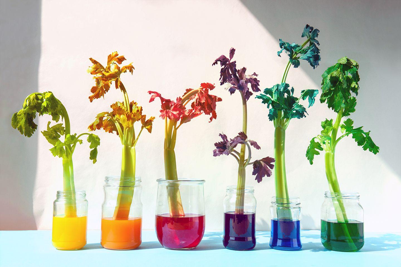 Bunt gefärbte Pflanzen
