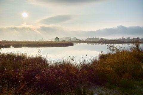 Großes Torfmoor, Hillermoor