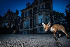 Fuchs, Bristol, UK
