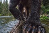 The Salmon Catchers
