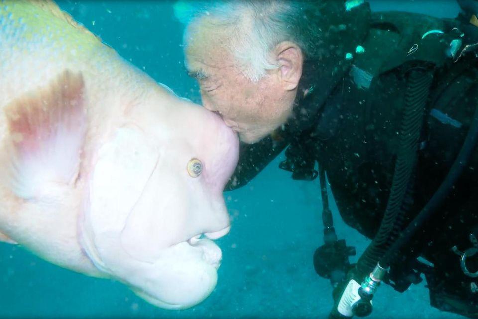 Cabo in Mexiko: Dieser riesige Seelöwe lässt sich von einem Motorboot mitnehmen