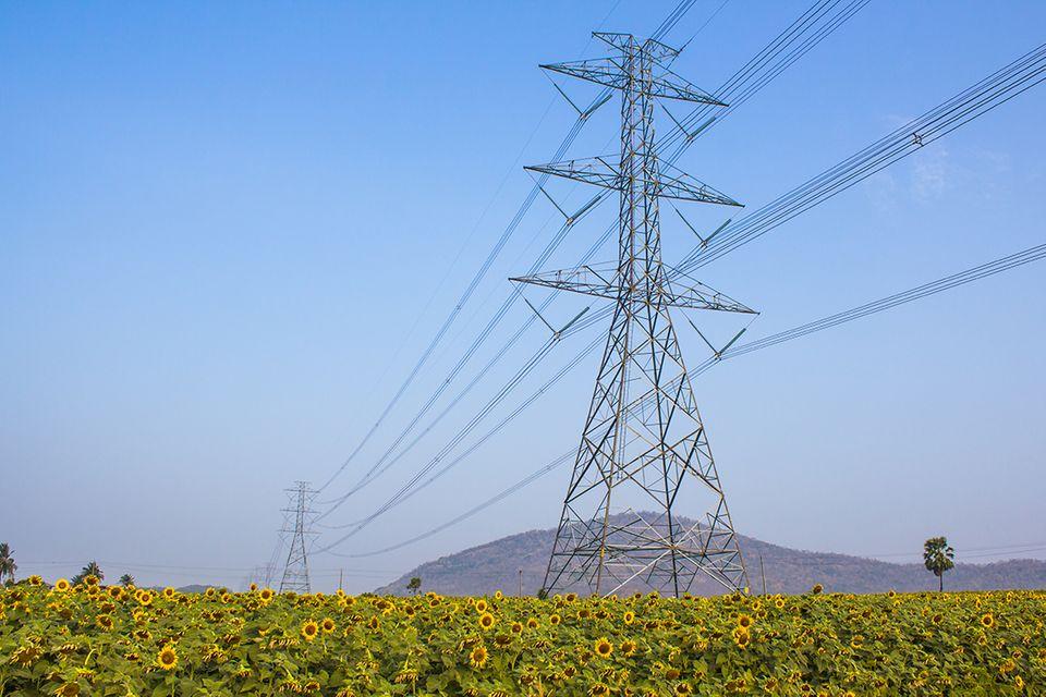 Strommasten über Sonnenblumen