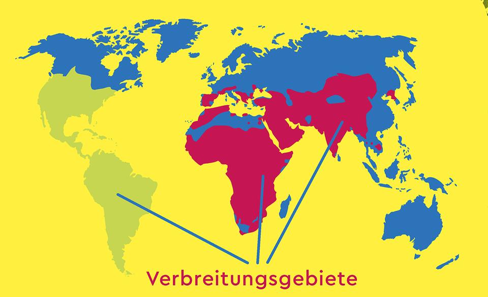 Verbreitungsgebiet der Geier weltweit