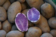"""Kartoffel """"Blauer Schwede"""""""