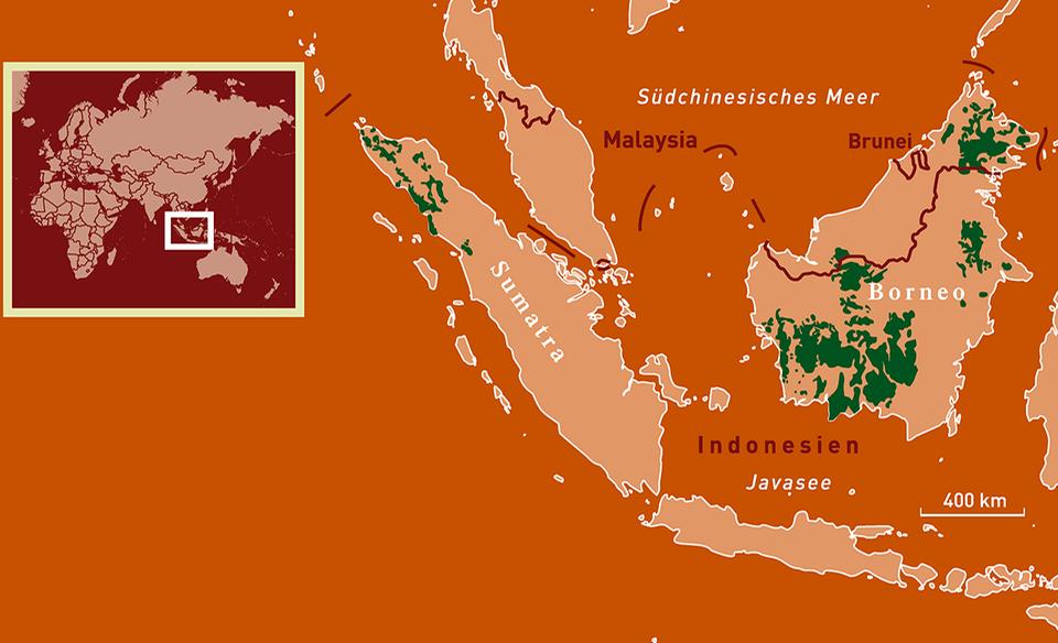 Orang-Utans Verbreitungskarte