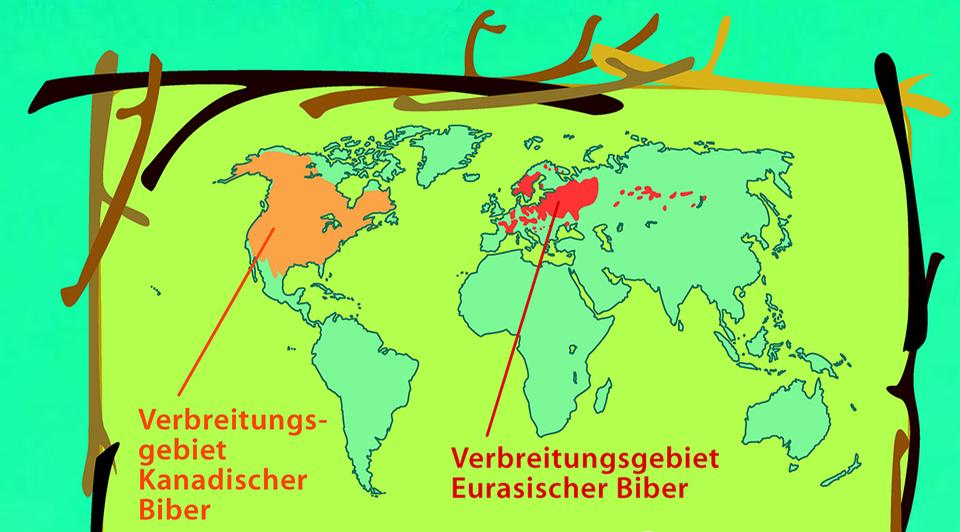 Biber leben in Amerika und Europa