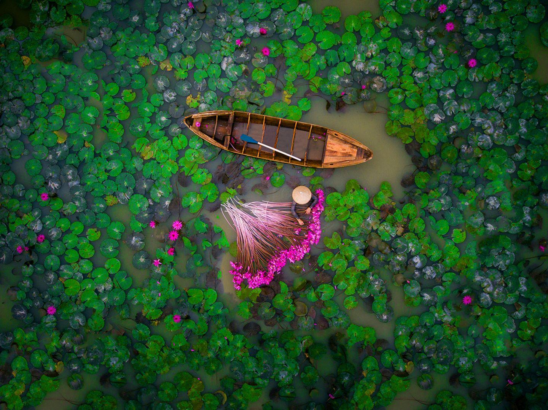 Wasserlilien in Vietnam