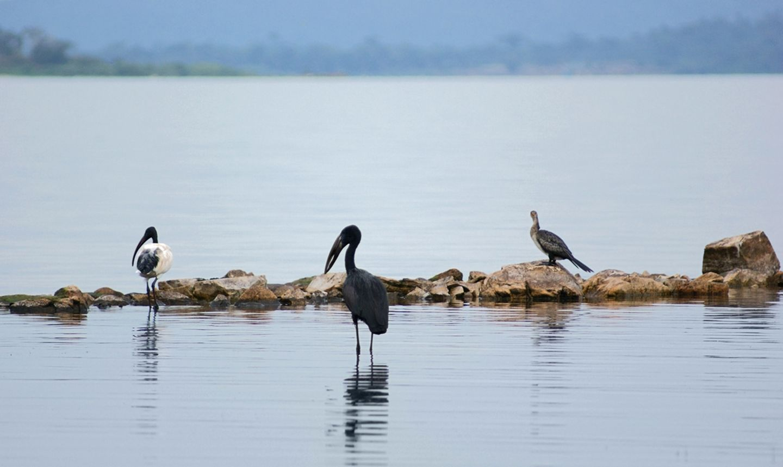 Victoriasee in Uganda