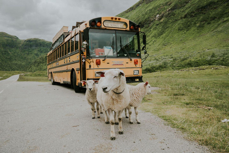 Schafe und rollendes Hostel