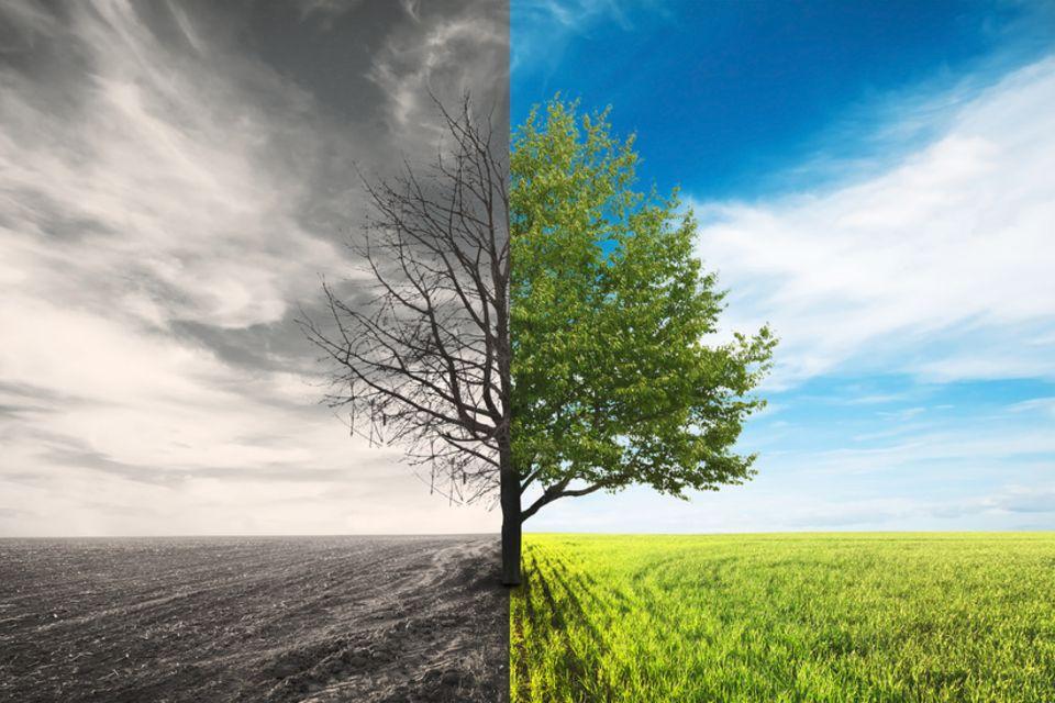 Toter und lebendiger Baum