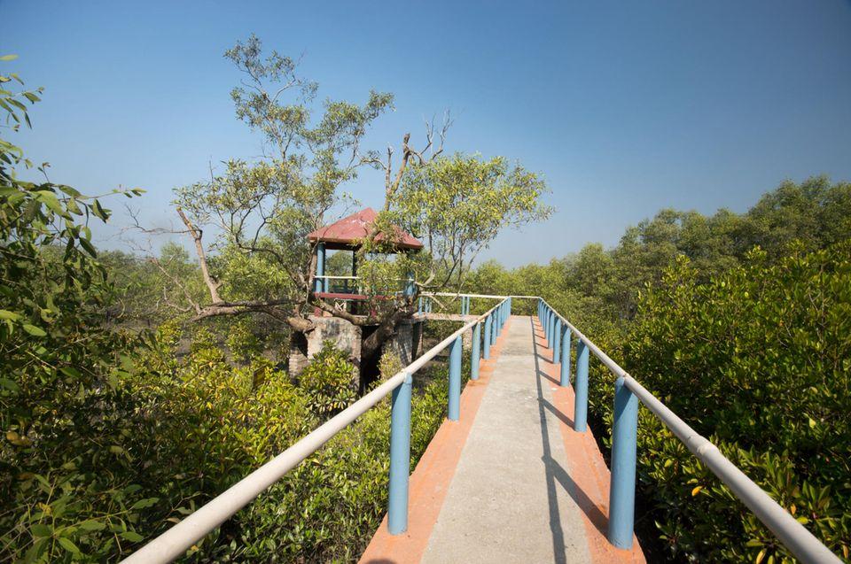 Indien: Der frisch renovierte Steg im Mangrovenbesucherpark
