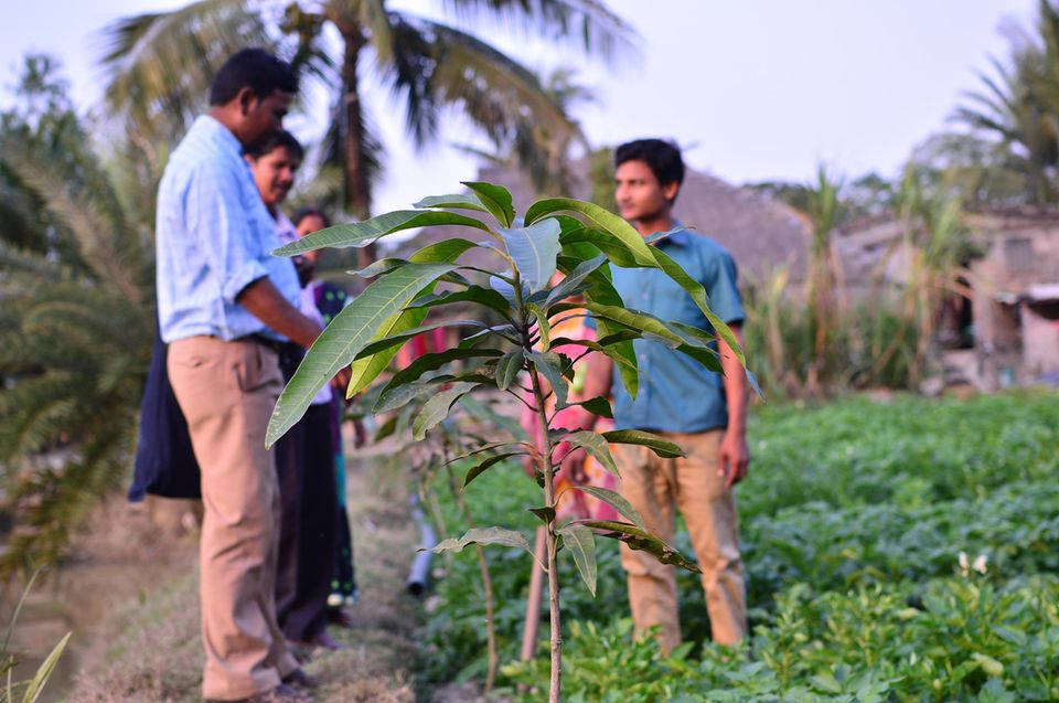 """Indien: Gemüsegarten eines """"Muster-Bauern"""""""