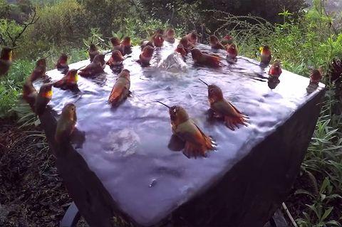 Kolibris in Wasserfontäne