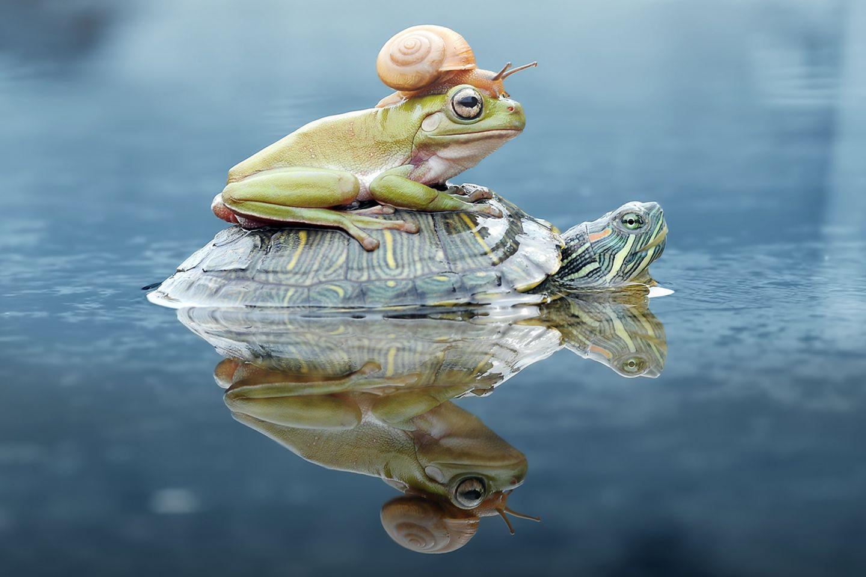 Schildkröte, Kröte und Schnecke