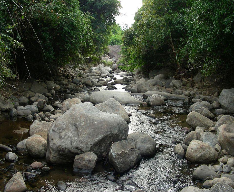 Neue Amphibie entdeckt: In solchen Flüssen, die im Sommer austrocknen, lebt die neu entdeckte Froschart