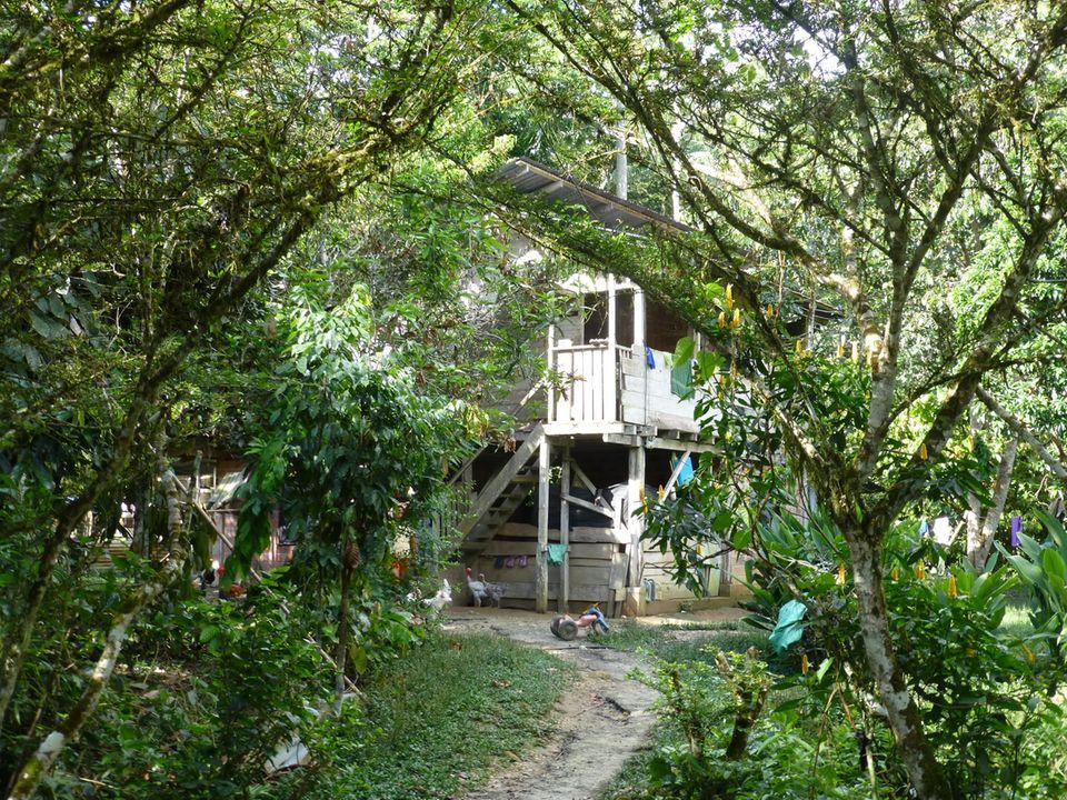 Ecuador: Die Kichwa-Familien aus der Napo-Region leben am und im Regenwald, weitgehend in Einklang mit der Natur