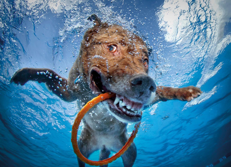 Seth Casteel, Hunde unter Wasser