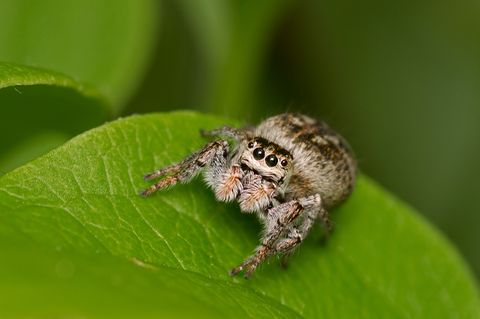 Spinne sitzt auf grünem Blatt